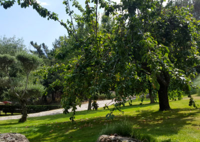 Ciruelos jardín casa Bonita Navacerrada
